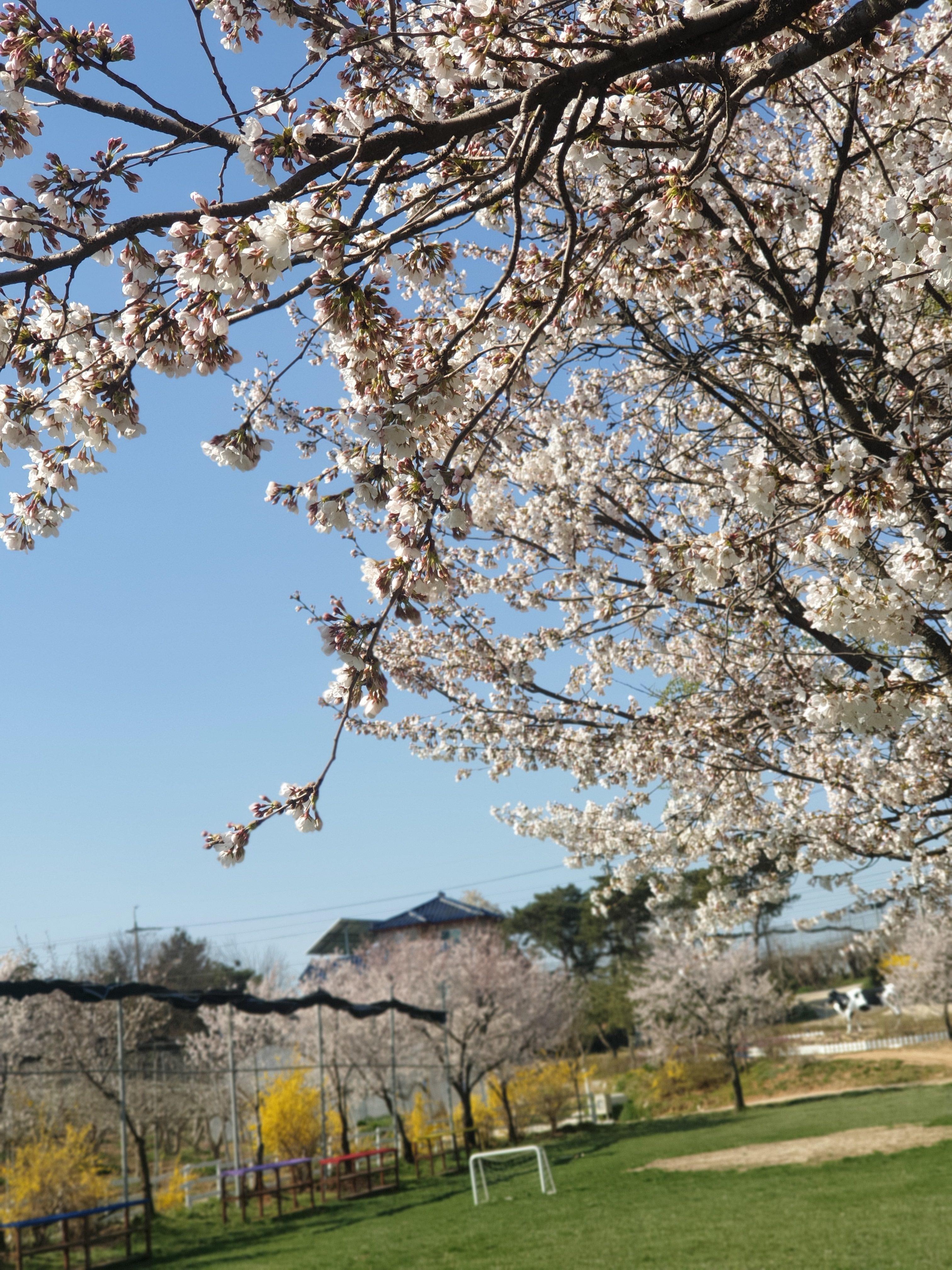 봄사진2.jpg
